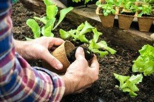 Fare l'orto allunga la vita (e la rende più felice) 6