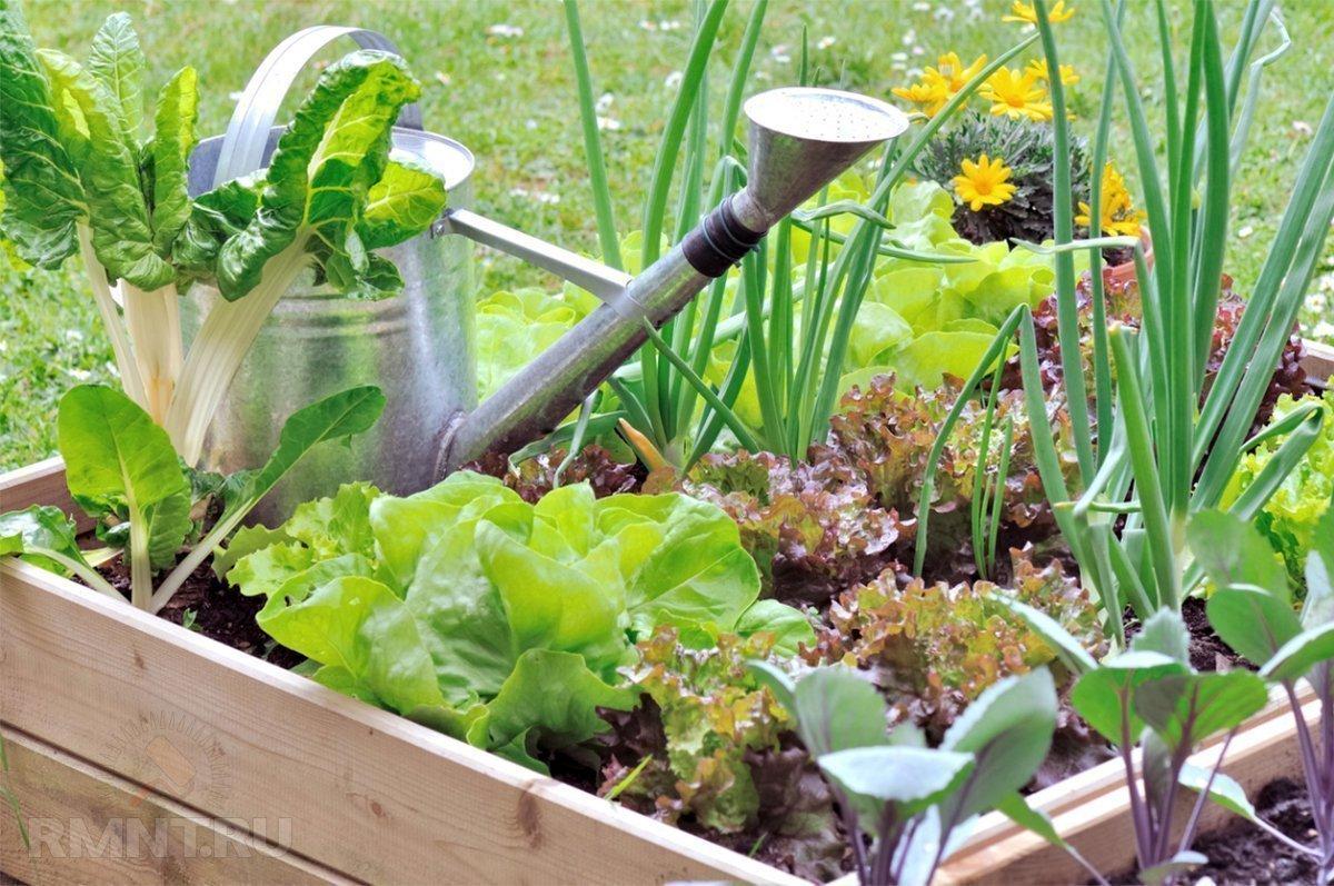 Fare l'orto allunga la vita (e la rende più felice) 1