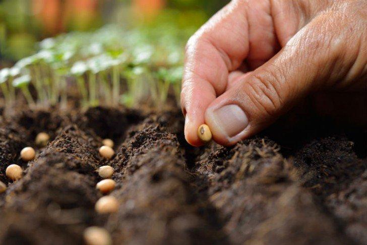 Come seminare l'orto e quando (e cosa) 1