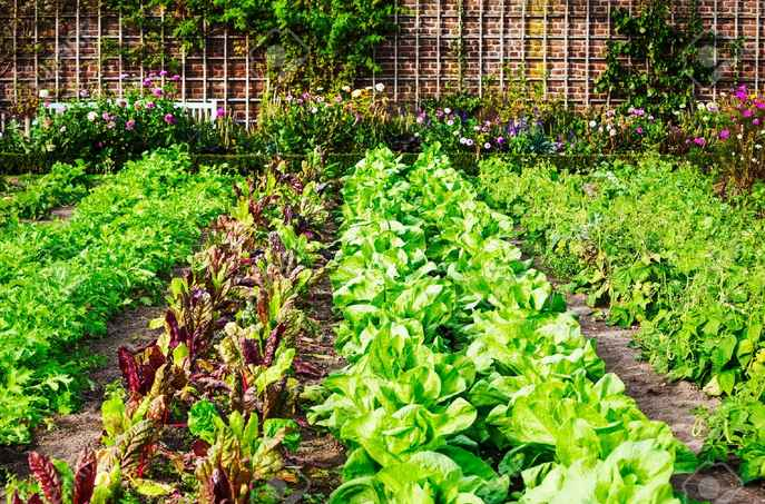 Favoloso Come fare l'orto da zero: piccola guida per neofiti - Orti in Affitto WK35