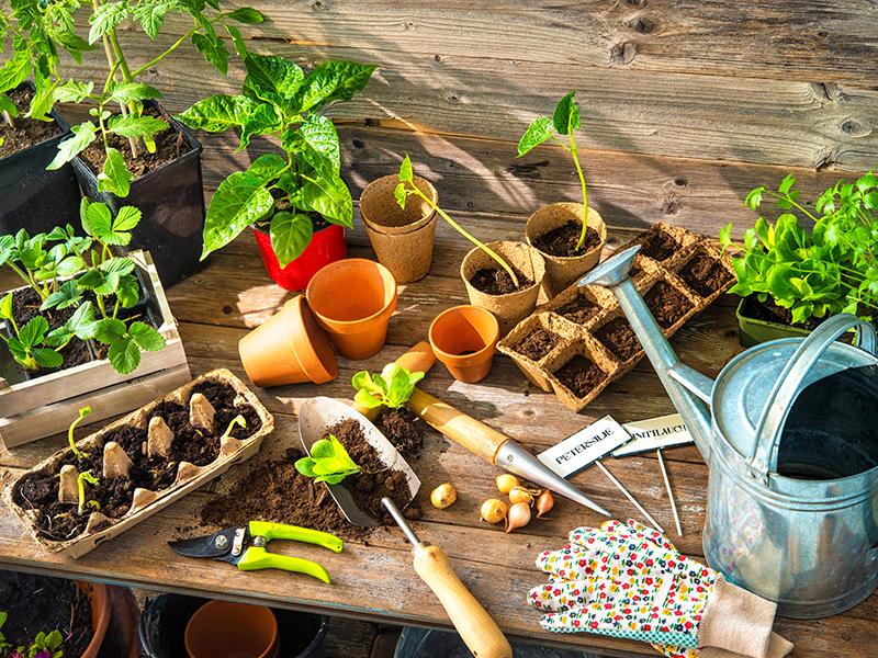Come coltivare l'orto tutto l'anno