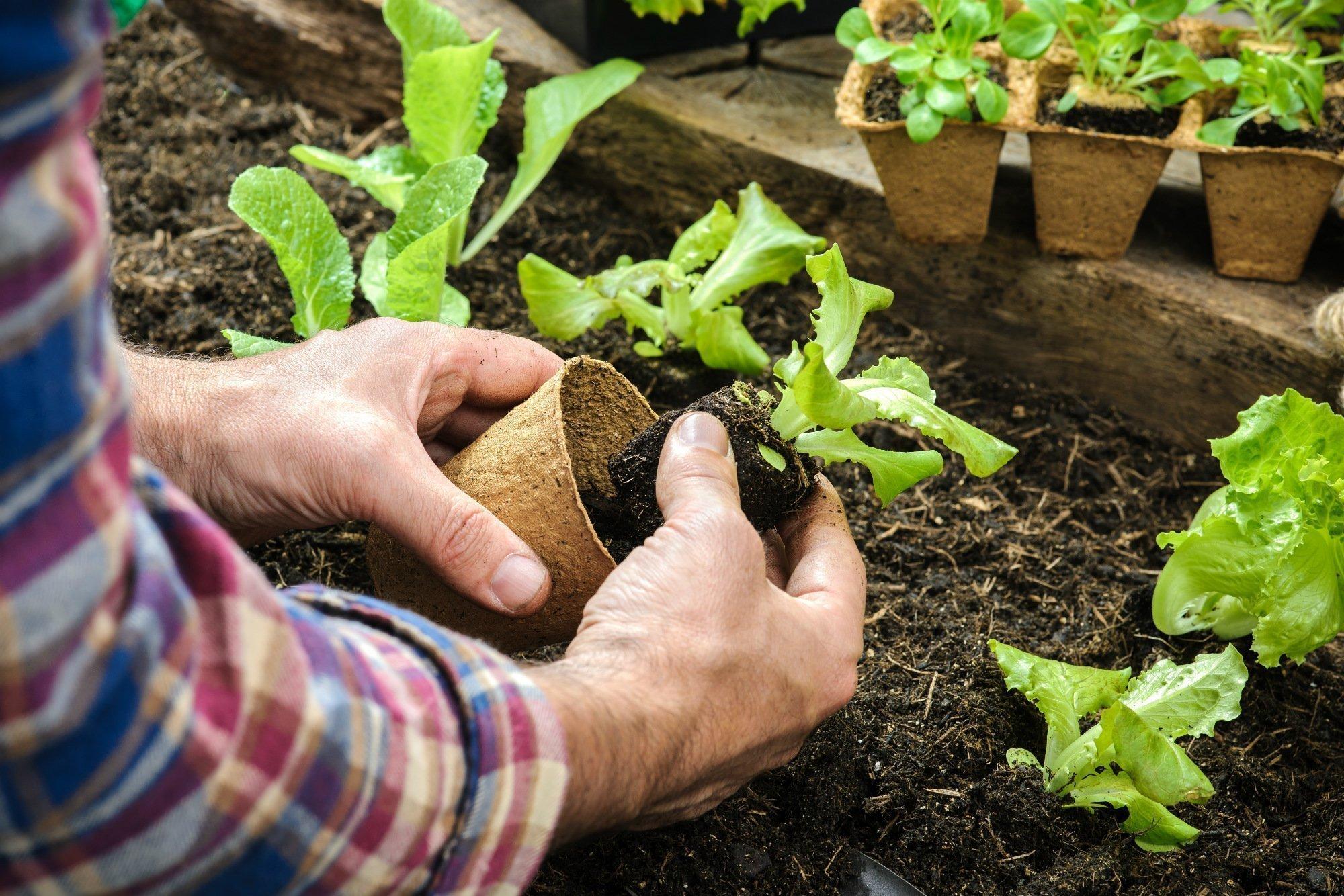 Qual è il migliore terriccio per l'orto?