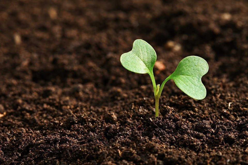 Si può coltivare senza acqua? 1