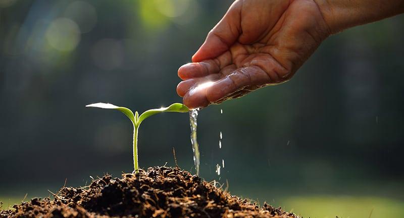 Quali sono le migliori app per la gestione dell'orto