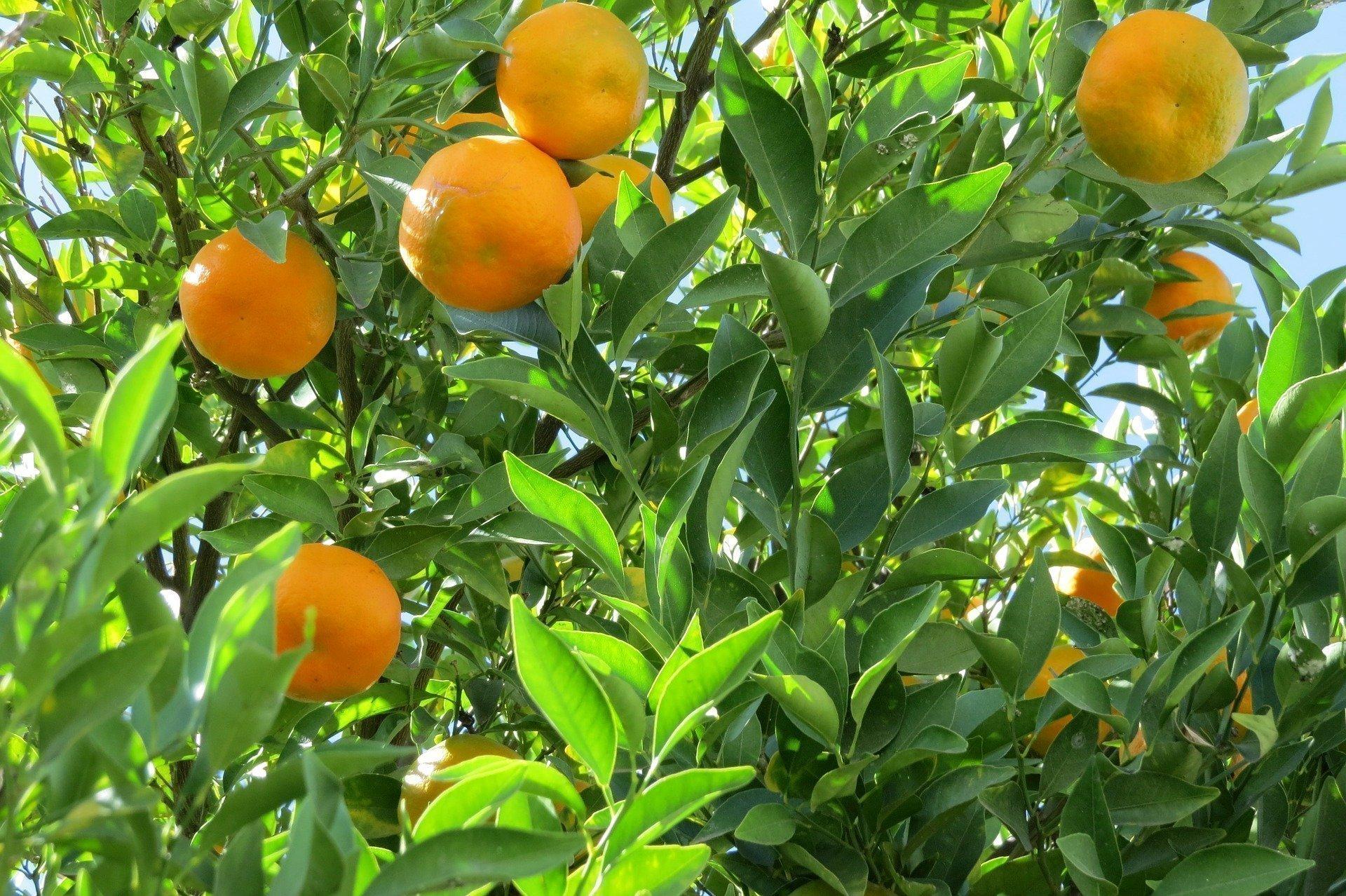 Alberi da Frutta resistenti al freddo