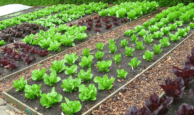 Cosa coltivare in un terreno senza acqua