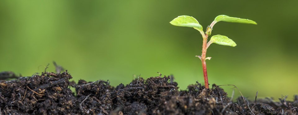 Perché i semi non germogliano?