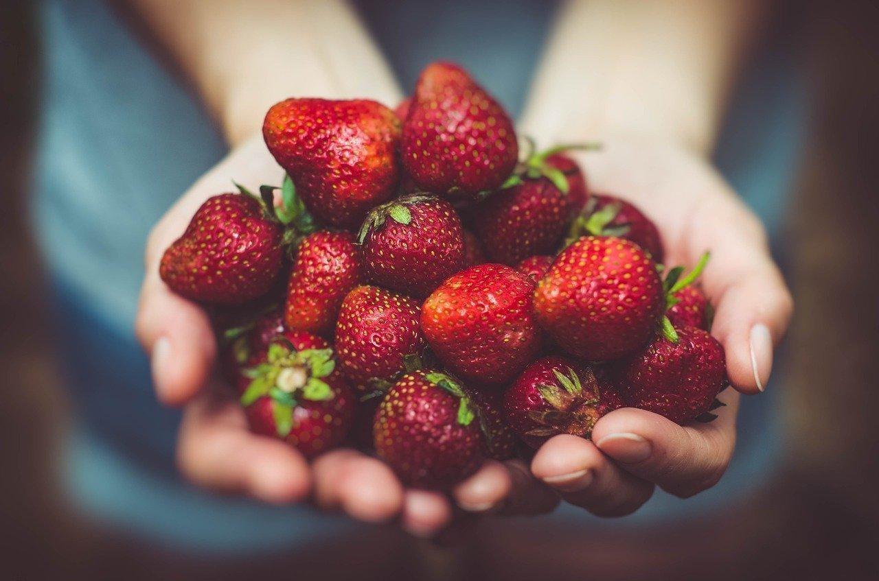 Quali sono i parassiti delle fragole e come difenderle