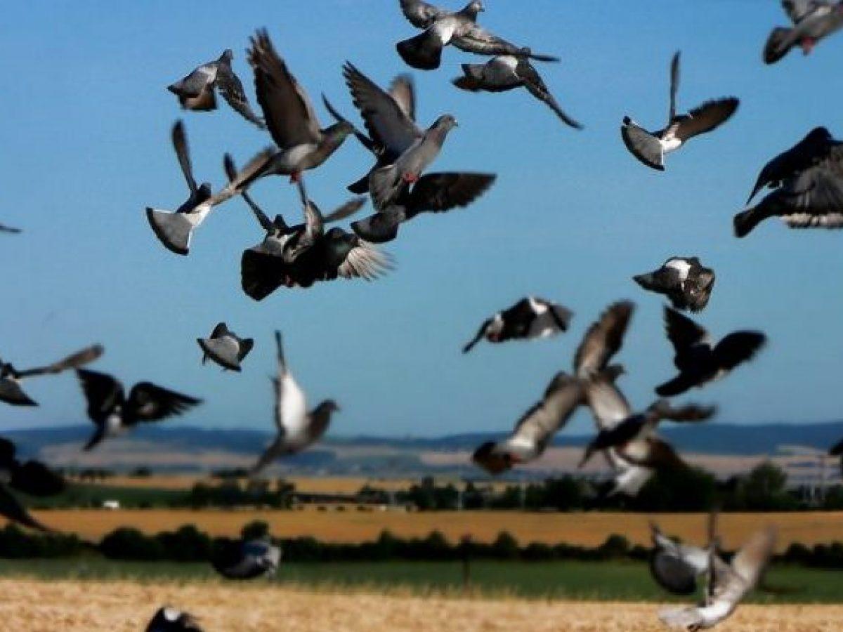 Come evitare che gli uccelli mangino i semi 1