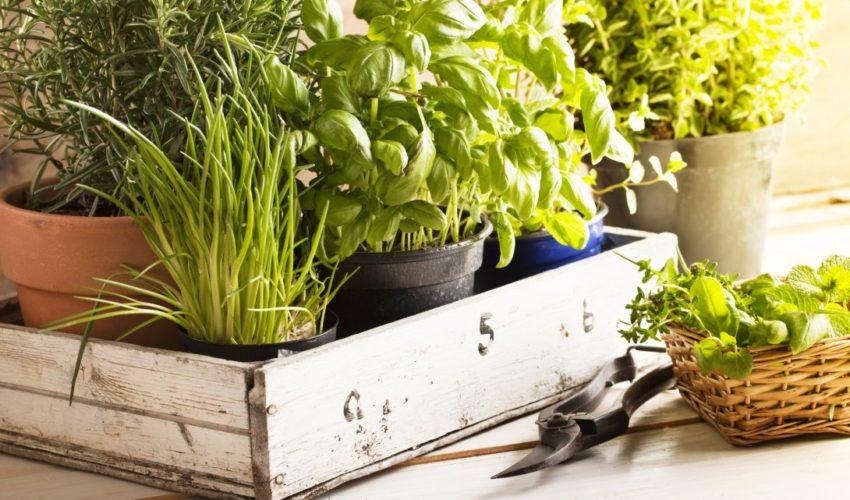 5 ortaggi da coltivare all'ombra