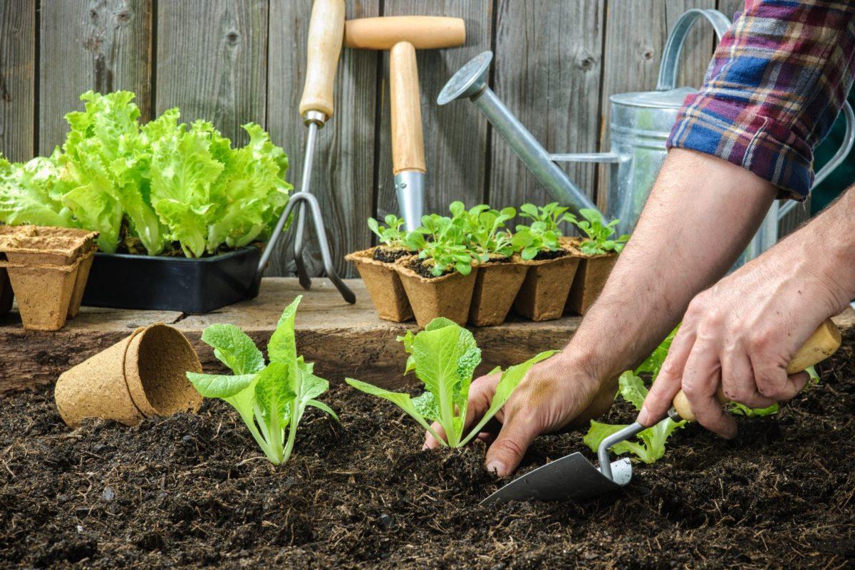 5 modi per abbellire l orto