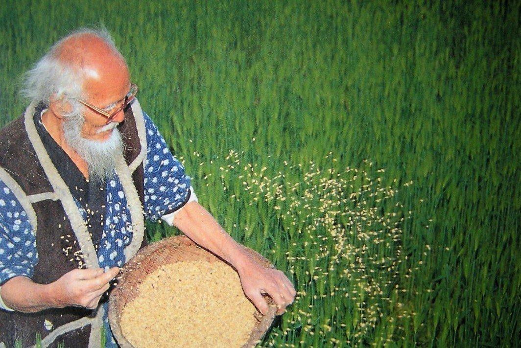 Come funziona l'agricoltura naturale del metodo Fukuoka 1