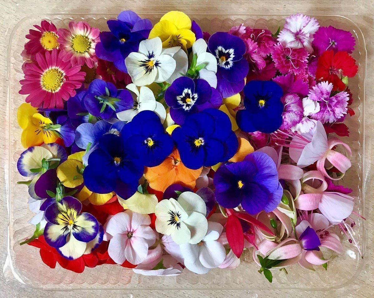Quali sono i migliori fiori commestibili da coltivare
