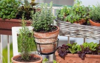 Cosa piantare in un orto sul balcone
