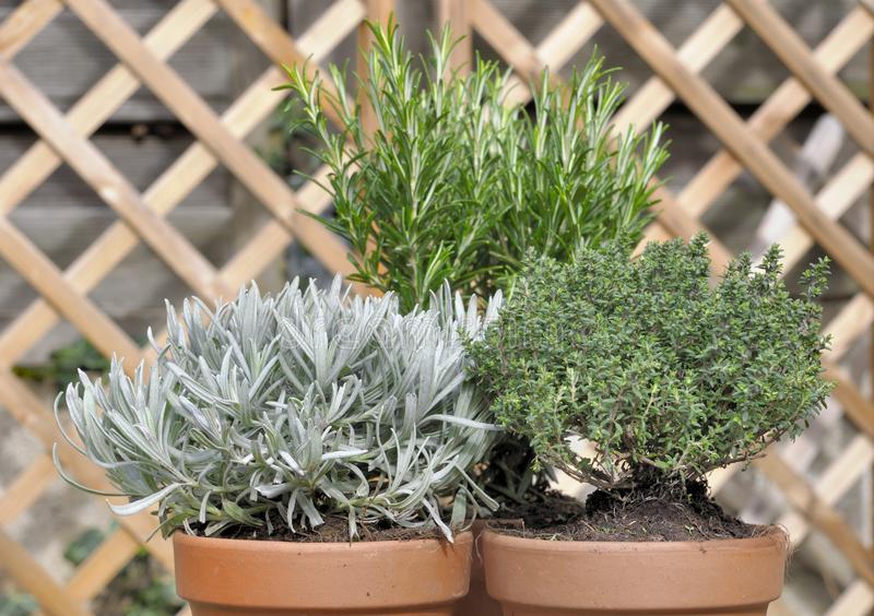 Piante aromatiche piccole da coltivare ovunque