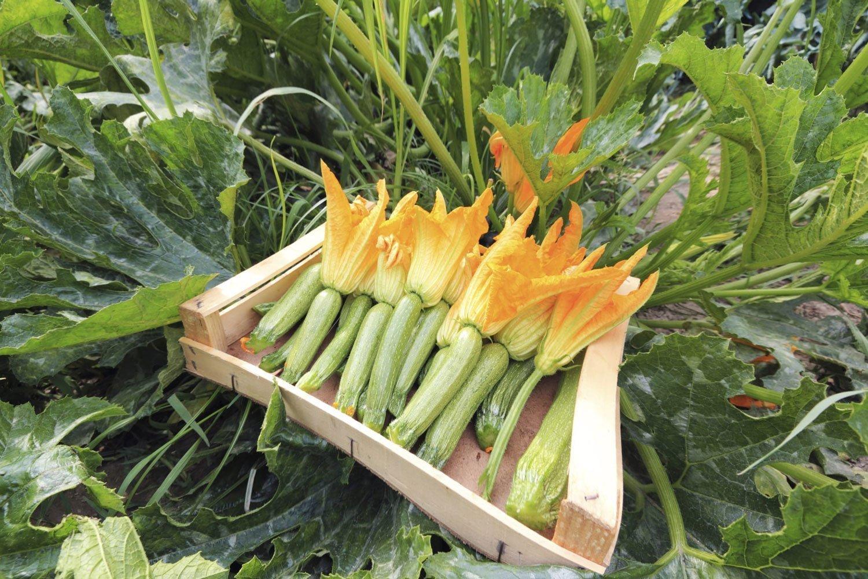 Potare le zucchine