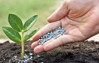 La Fertilizzazione