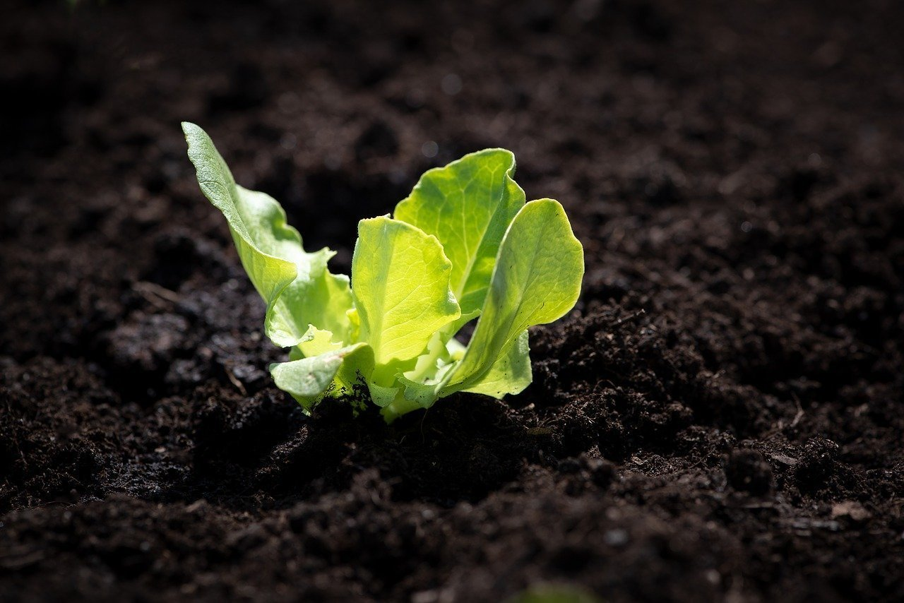 fertilizzanti organici
