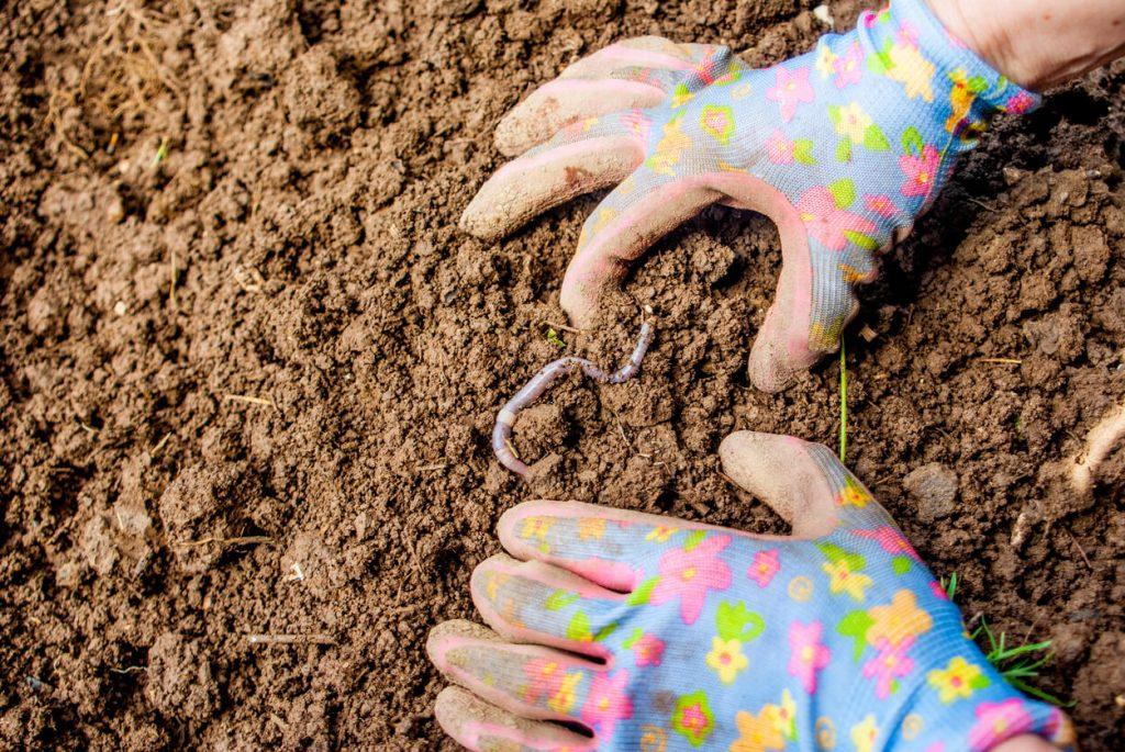 Come eliminare i vermi dal terreno