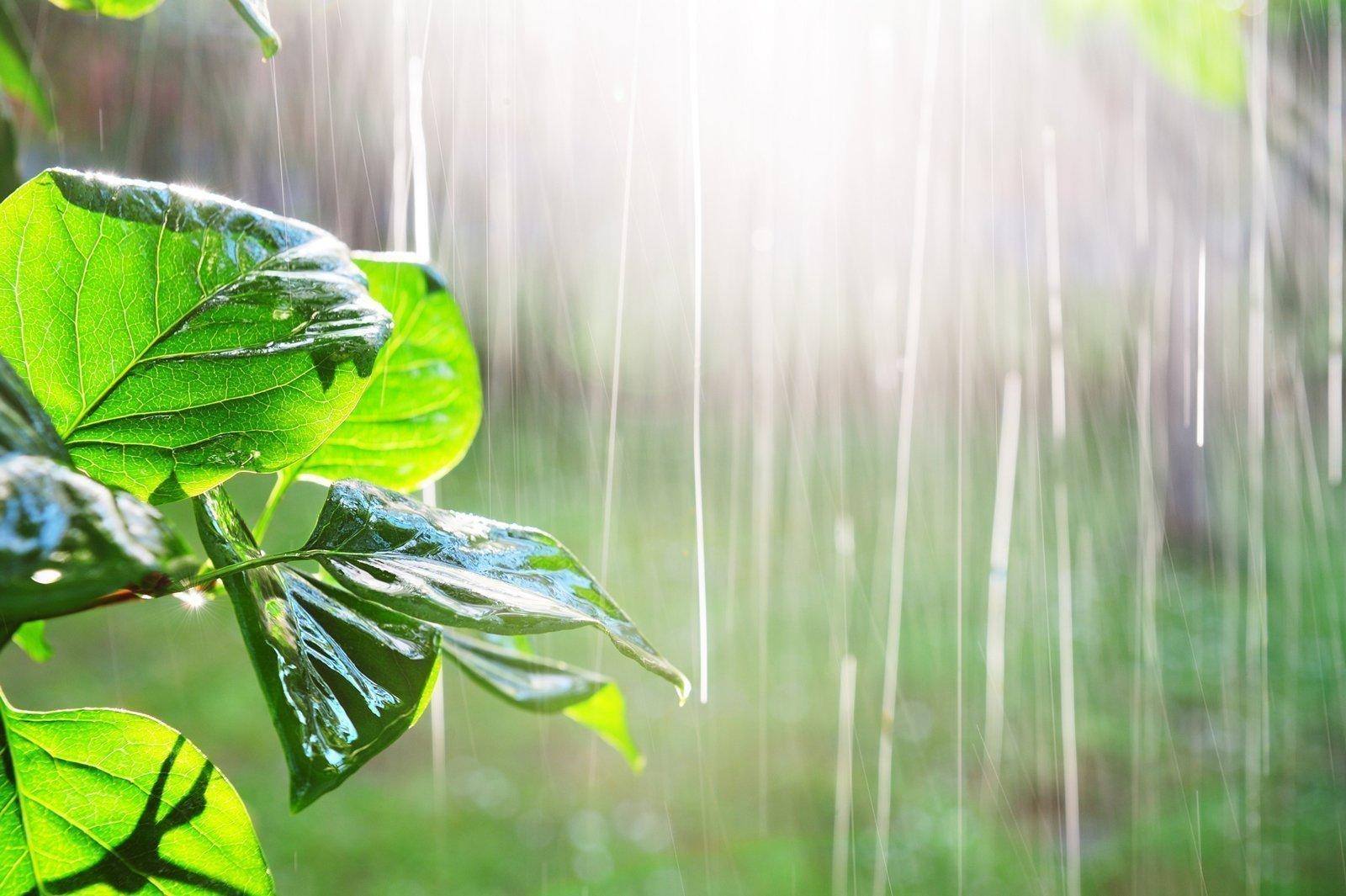 Pioggia-nell-orto