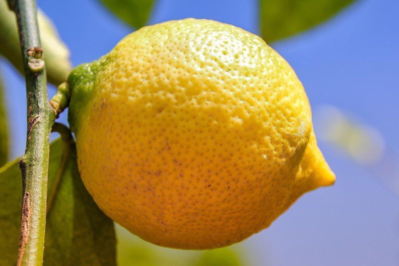 Prepara il tuo concime per limoni fatto in casa