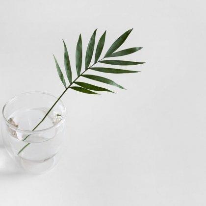 Con quali piante usare la talea in acqua