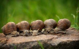 Difesa da lumache, uccelli e fauna varia