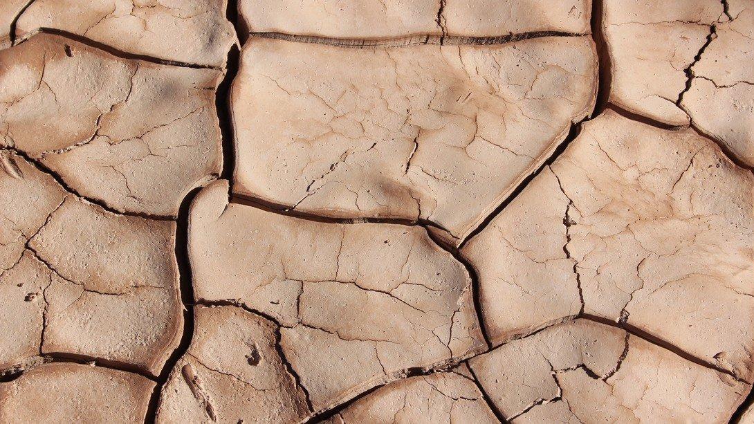 Terreno Argilloso Cosa Coltivare