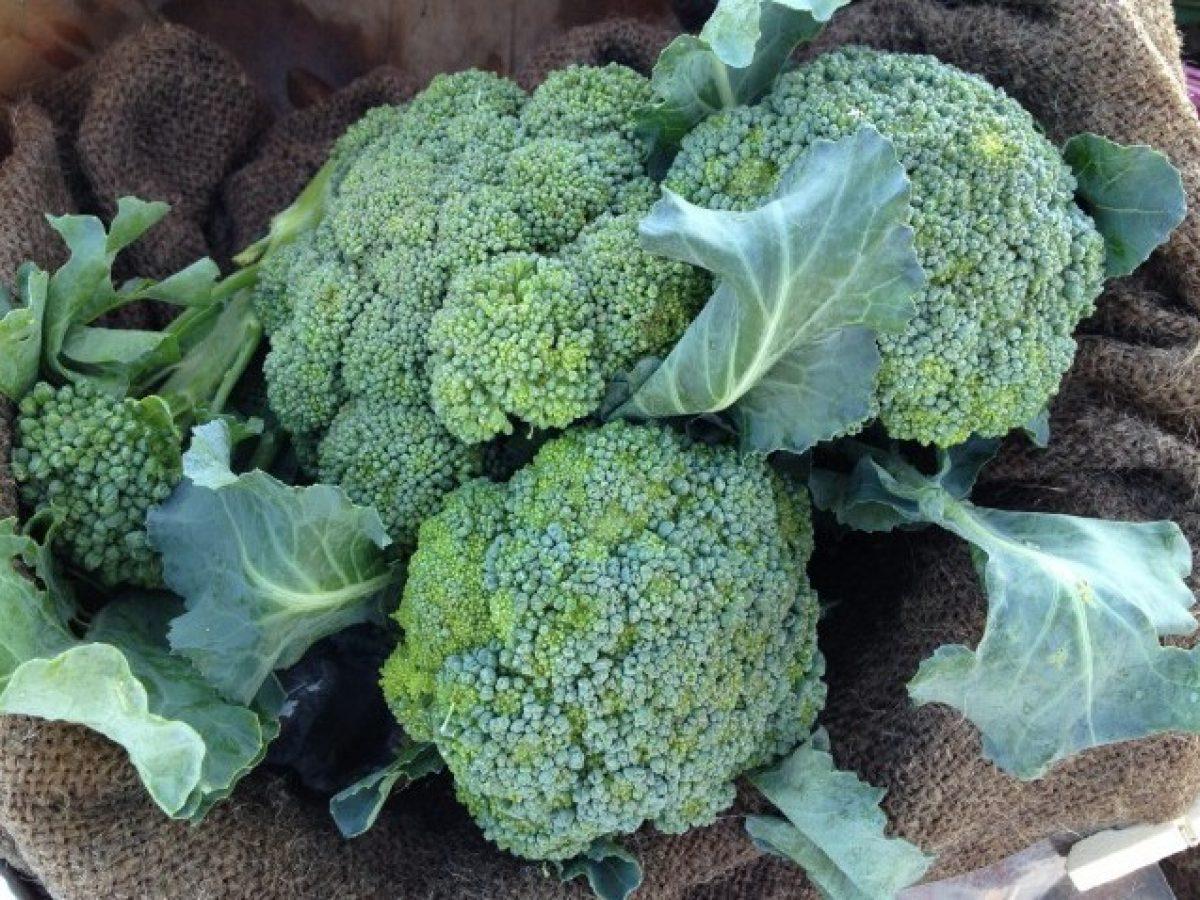 Trucchi per la coltivazione dei broccoli nell'orto