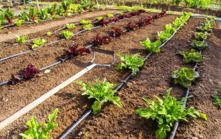 L'irrigazione 12