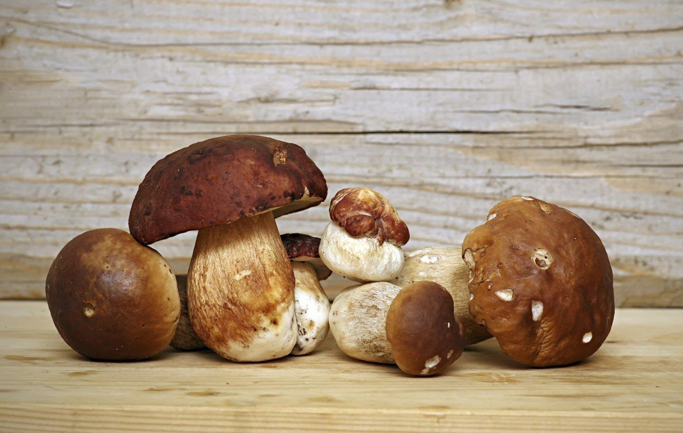 Come coltivare i funghi porcini. Sempre che sia possibile