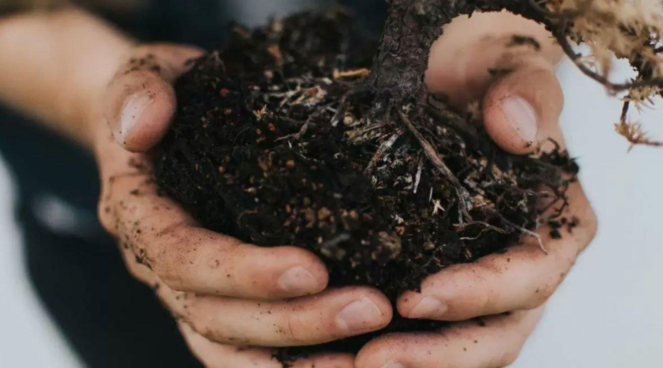 cosa piantare in un terreno sabbioso
