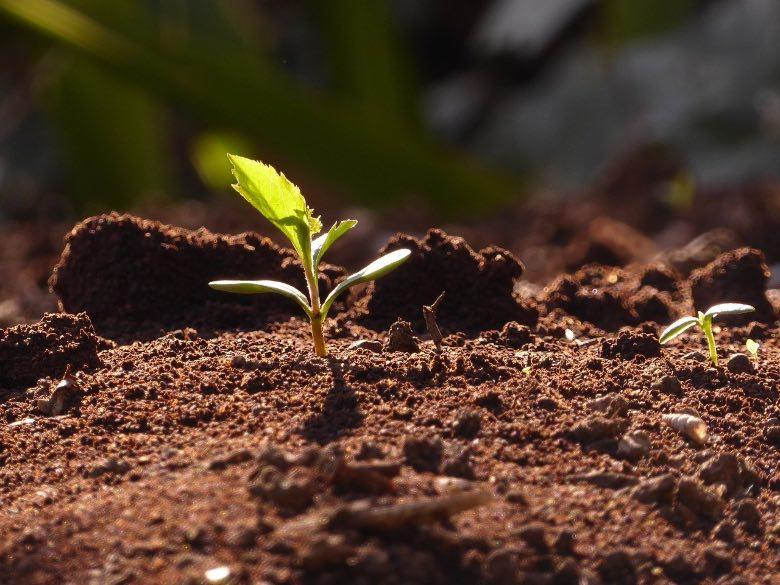 I segreti per una germinazione veloce dei semi