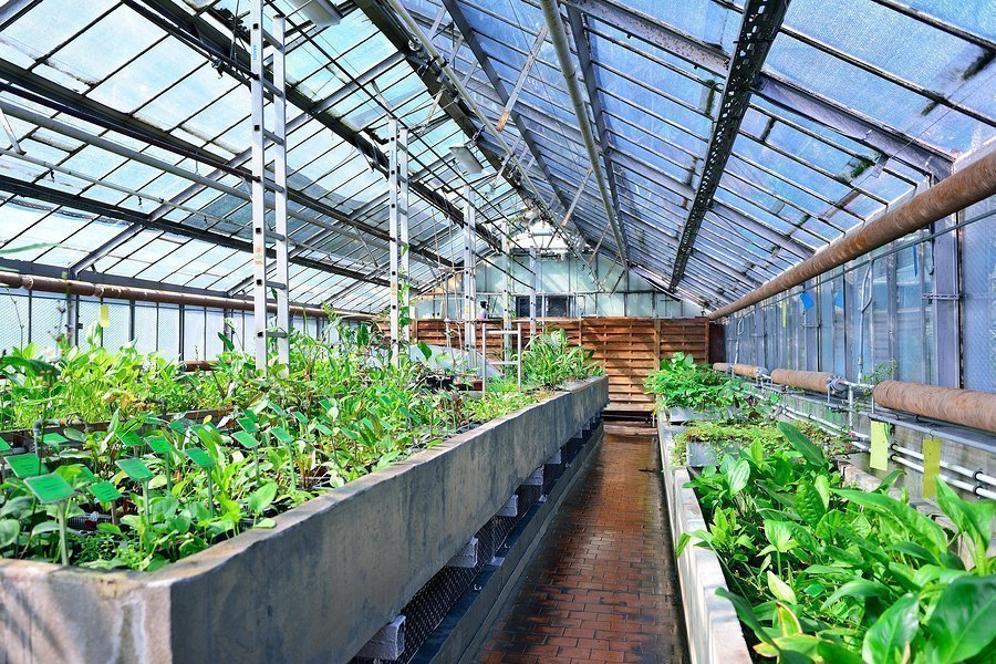 Consigli per coltivare in serra tutto l'anno