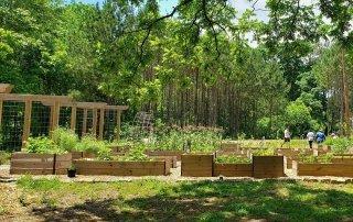 Cos'è una food forest e come crearla