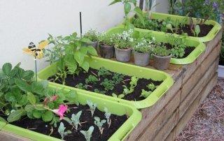 Come realizzare un orto invernale in vaso 8
