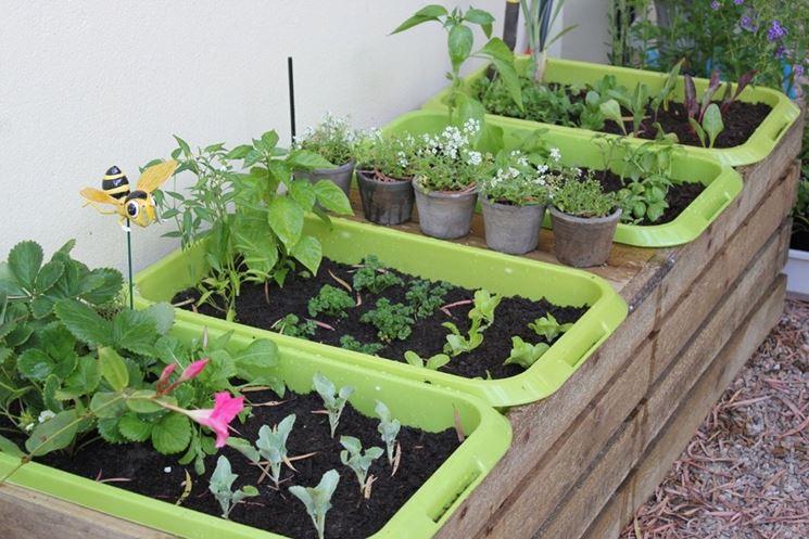Come realizzare un orto invernale in vaso 1
