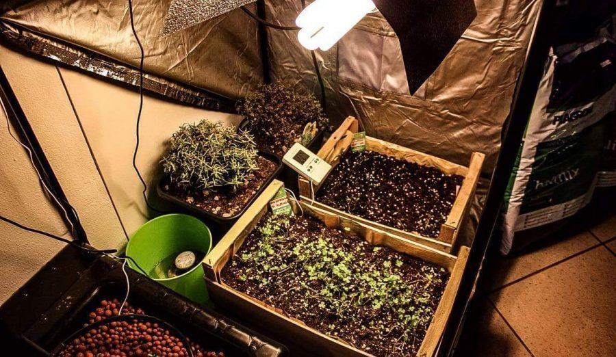 Quali lampade usare per le coltivazioni indoor?