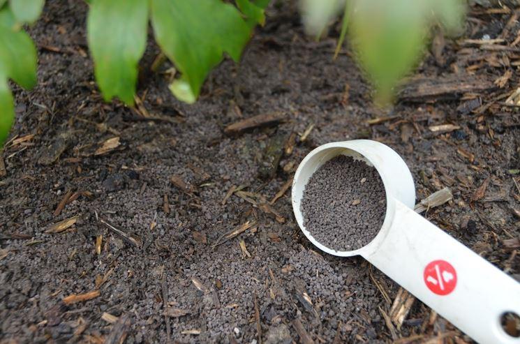 Il concime per l'orto biologico: quale usare e come
