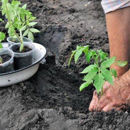 Cosa piantare nell'orto a marzo? 2