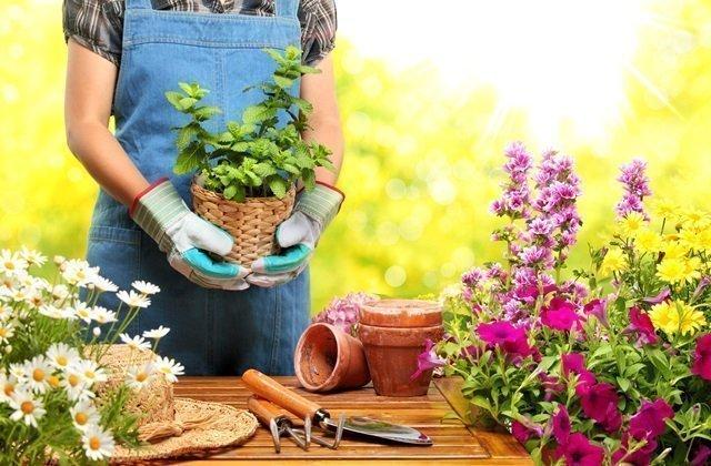 Quante calorie si bruciano facendo giardinaggio
