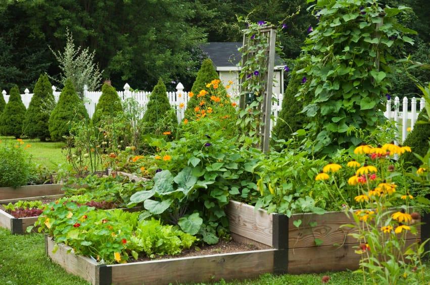 Orto o giardino? Perché scegliere? 2