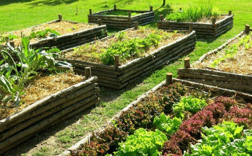 Come avere il pollice verde nell'orto e in giardino