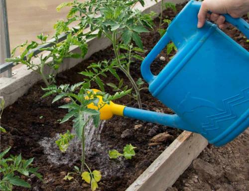 Quali ortaggi hanno bisogno di molta acqua