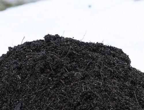 Qual è il miglior terriccio da semina?