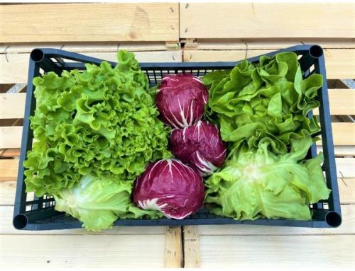 Consigli per coltivare l'insalata in cassetta
