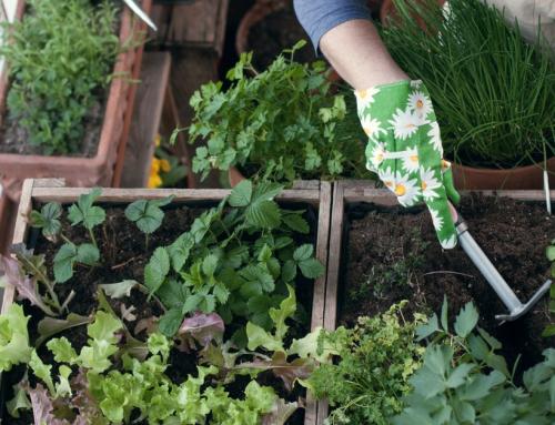 Si può fare un orto sul balcone in autunno?